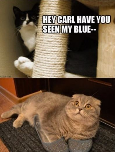 Cat - HEY CARL HAVE YOU SEEN MY BLUE- rza me