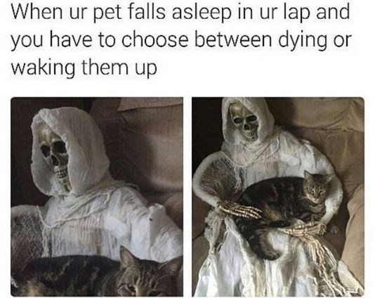 Adaptation - When ur pet falls asleep in ur lap and you have to choose between dying or waking them up