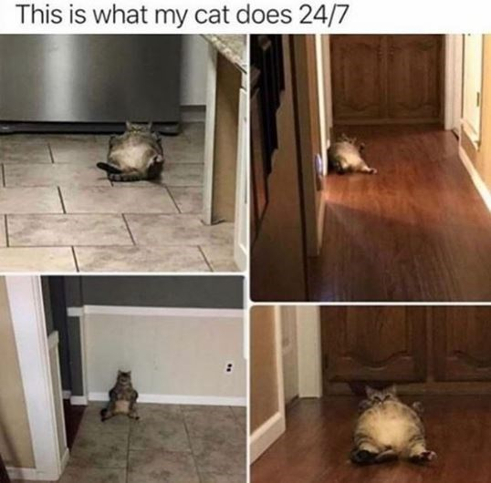 Floor - This is what my cat does 24/7