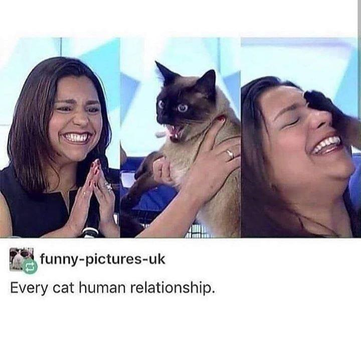 tumblr post about cats and their owners