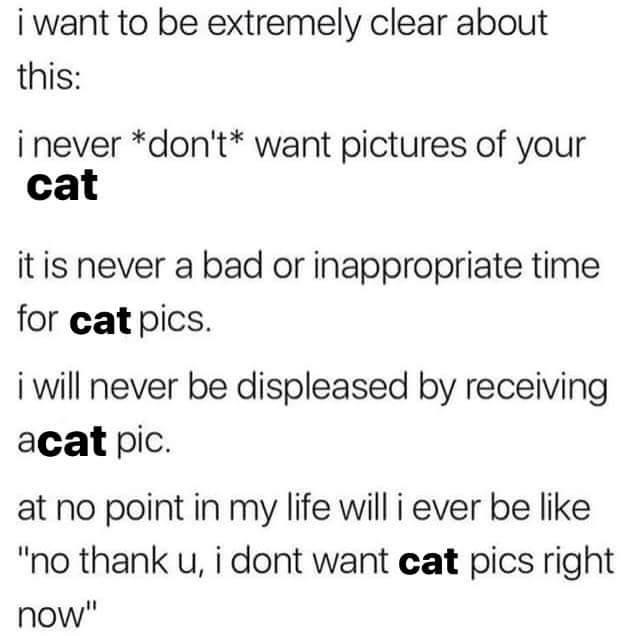 cat tweet - 9339954176