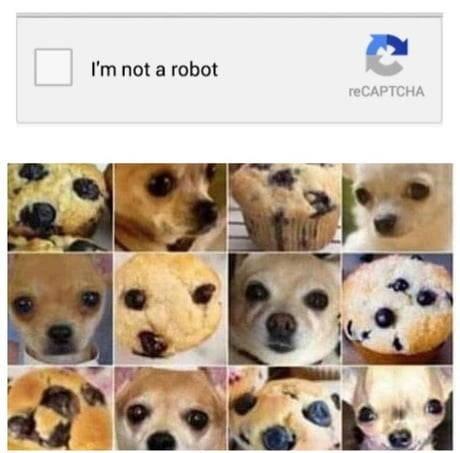 dog memes - 9340024832