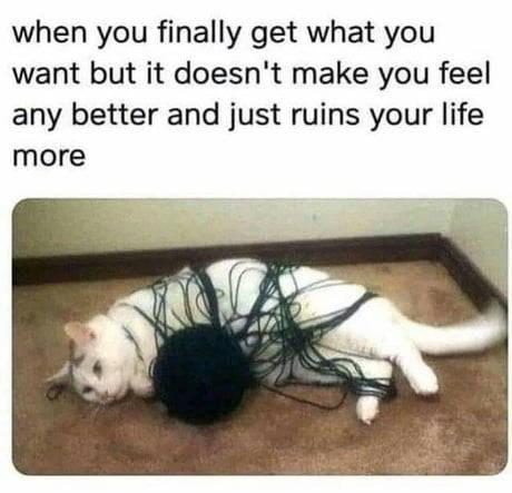 cat memes - 9340027392