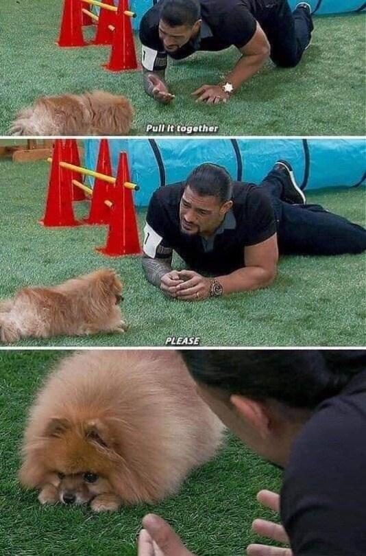 dog memes - 9340030976
