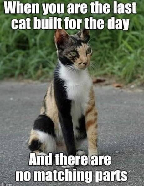 cat memes - 9340034560