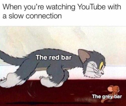 animal memes - 9340037632