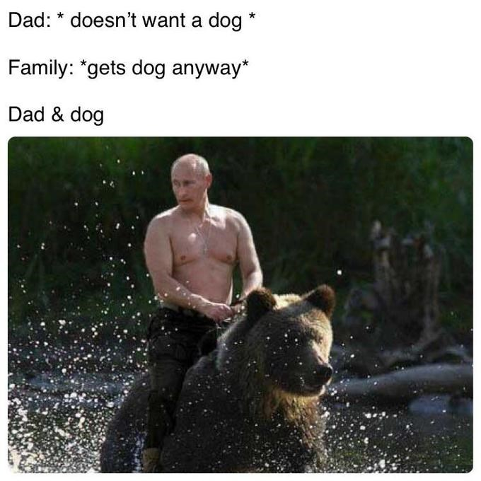 Bear - Dad: doesn't want a dog Family: *gets dog anyway* Dad & dog