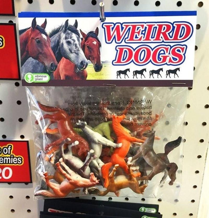 weird toy - Technology - WEIRD DOG'S obvious plant mott vswe psd eir a9s l oninAN sedio nisauon oc neblido bas a0idsd int erlT ensgvela na2ensmsoebed unilk yem il esid inev910 emies 20