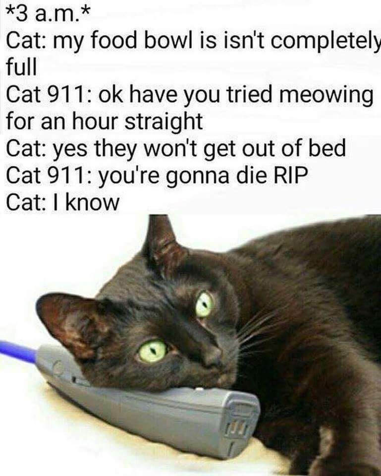 Cat - *3 a.m.* Cat: my food bowl is isn't completely full Cat 911: ok have you tried meowing for an hour straight Cat: yes they won't get out of bed Cat 911: you're gonna die RIP Cat: I know