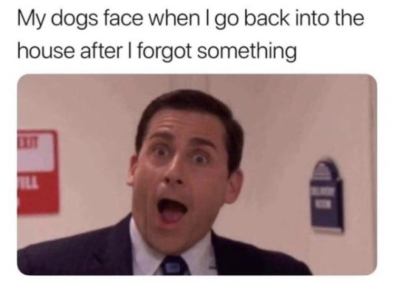 Forehead - My dogs face when I go back into the house after I forgot something EXIT ILL
