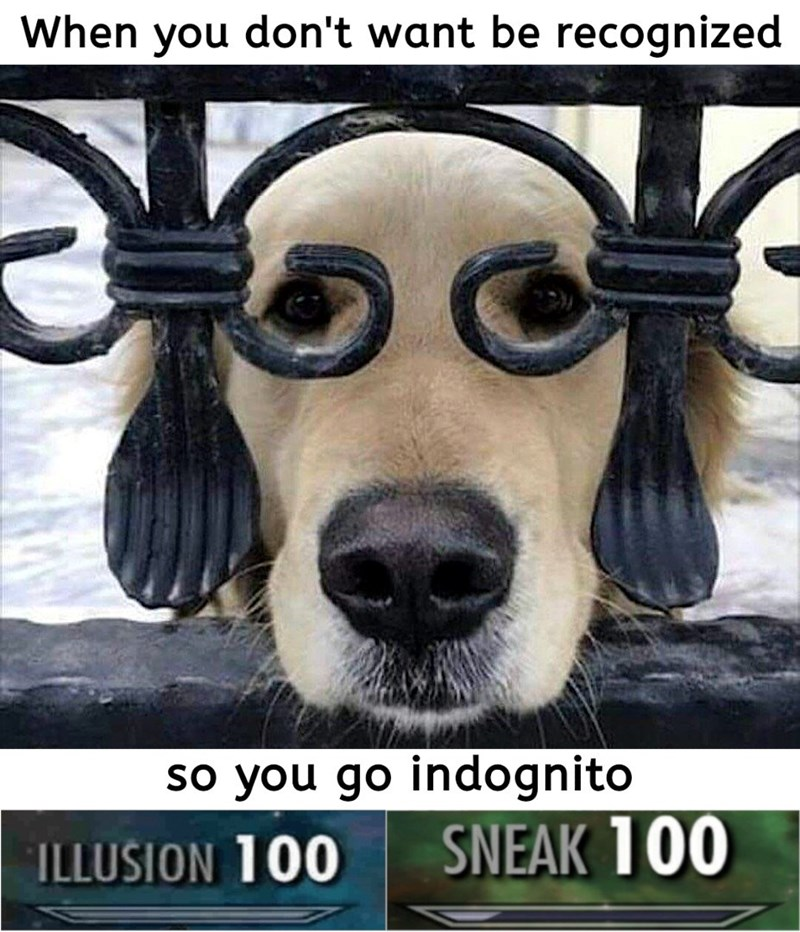Canidae - When you don't want be recognized so you go indognito SNEAK 100 ILLUSION 100