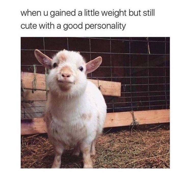 Goats - when u gained a little weight but still cute with a good personality