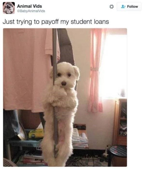 student loans - Dog - Animal Vids Follow BabyAnimalVids Just trying to payoff my student loans