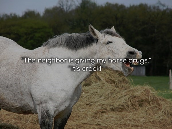 "Mammal - ""The neighbor is giving my horse drugs."" II ""It's crack!"""