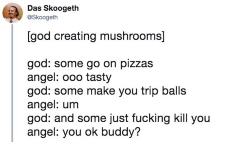 creating animals - Text - Das Skoogeth @Skoogeth [god creating mushrooms] god: some go on pizzas angel: ooo tasty god: some make you trip balls angel: um god: and some just fucking kill you angel: you ok buddy?