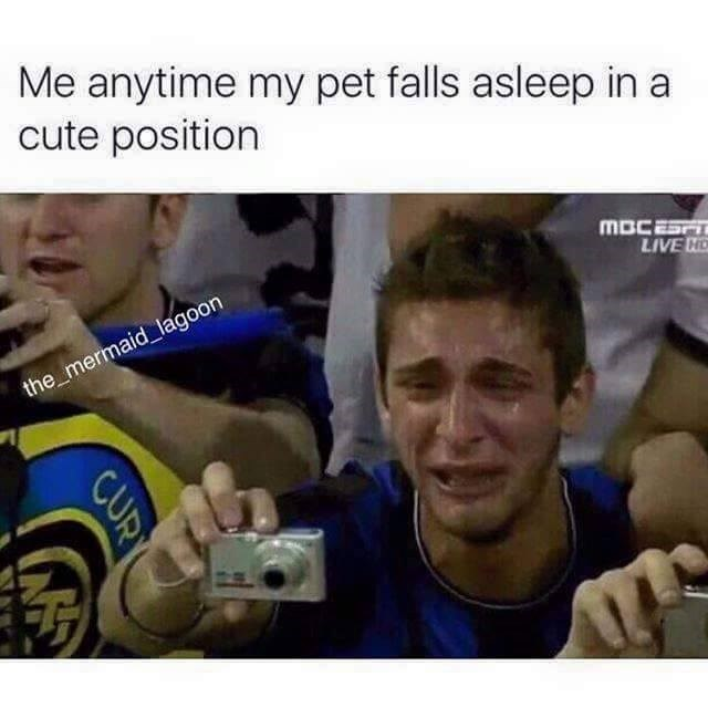 Product - Me anytime my pet falls asleep in a cute position MBCESFT LIVE N the mermaid lagoon CUR