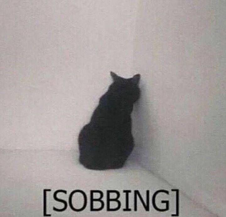 Cat - [SOBBINGT