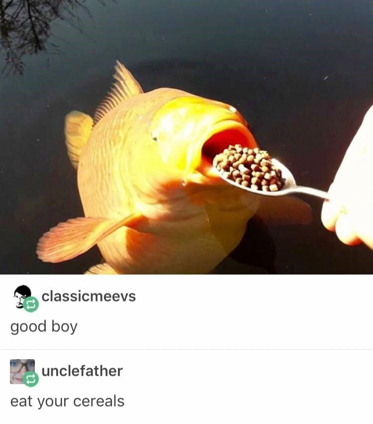 Fish - classicmeevs good boy unclefather eat your cereals