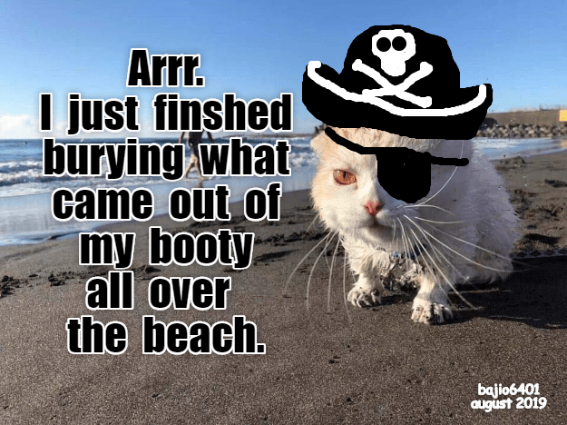 funny cat memes lolcats poop kitten beach cute cats funny cats pirates meow kitty Cats cat memes - 9340738304