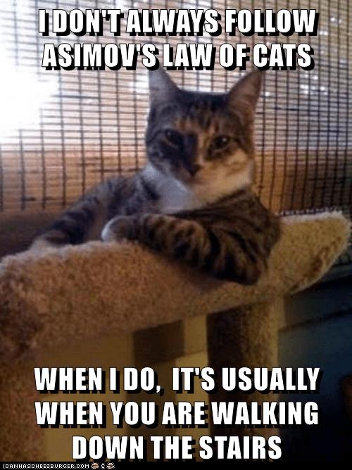 funny cat memes lolcats laws evil cute cute cats funny cats evil cat amisov Cats cat memes - 9340838656