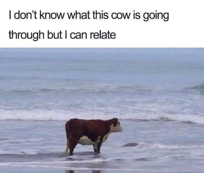 Text - I don't know what this cow is going through but I can relate