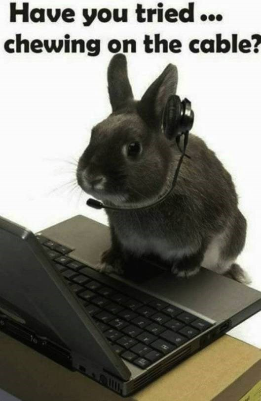 animal meme - Rabbit - Have you tried.. chewing on the cable?