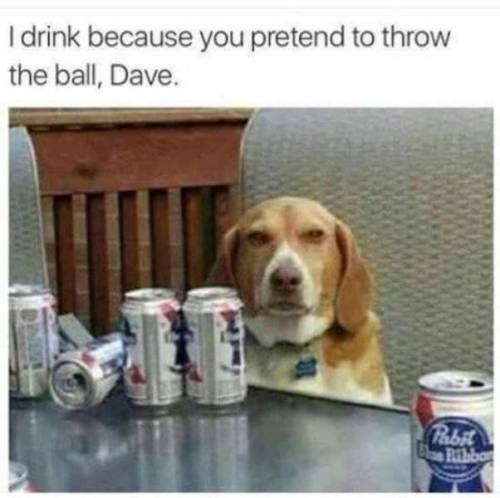 animal meme - Dog - I drink because you pretend to throw the ball, Dave. Pabit Ribbo