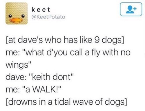 "animal meme - Text - keet @KeetPotato [at dave's who has like 9 dogs] ""what d'you call a fly with no wings"" dave: ""keith dont"" me: ""a WALK!"" [drowns in a tidal wave of dogs]"