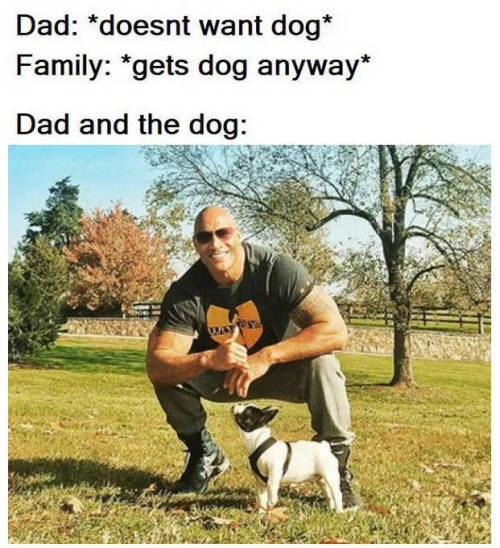 animal meme - Mammal - Dad: *doesnt want dog* Family: *gets dog anyway Dad and the dog: WAY