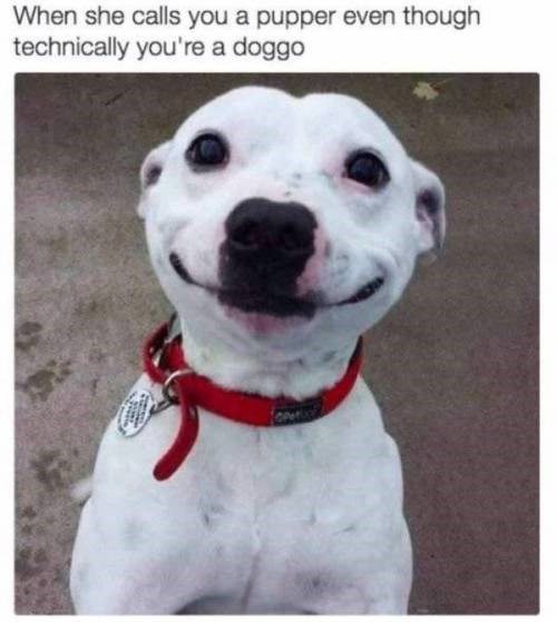 animal meme - Dog - When she calls you a pupper even though technically you're a doggo