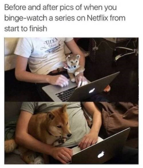 animal meme - Photo caption - Before and after pics of when you binge-watch a series on Netflix from start to finish TILES