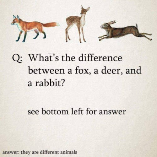animal meme - Text - Q: What's the difference between a fox, a deer, and a rabbit? see bottom left for answer answer: they are different animals