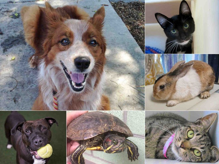 clear the shelters - Vertebrate