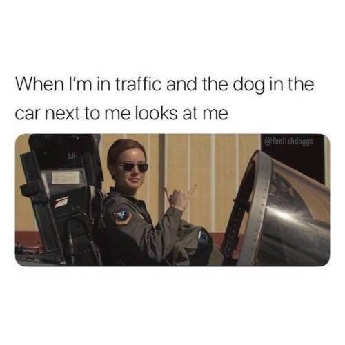 dog memes - 9341026304