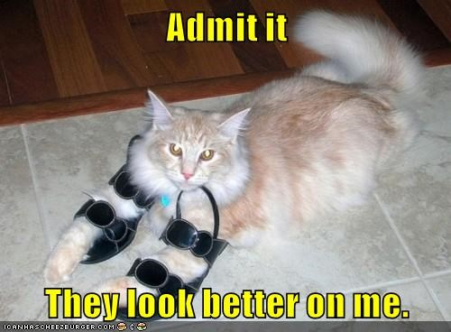 funny cat memes lolcats haha cute cute cats lol funny cats dress up meow cats are weird Cats cat memes - 9341027072