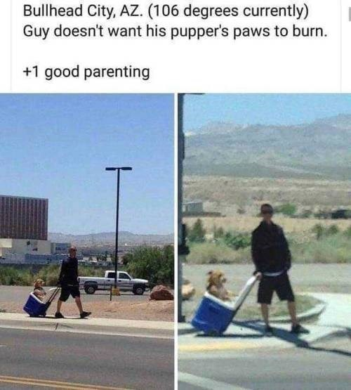 wholesome animal meme - Asphalt - Bullhead City, AZ. (106 degrees currently) Guy doesn't want his pupper's paws to burn. +1 good parenting