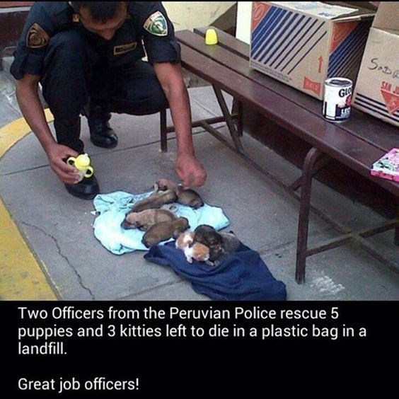 wholesome animal meme - Human - Sot SAN J GL puppies and 3 kitties left to die in a plastic bag in a landfill Two Officers from the Peruvian Police rescue 5 Great job officers!