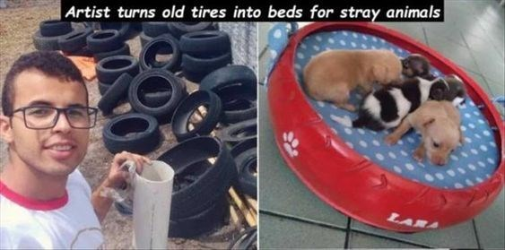wholesome animal meme - Canidae - |Artist turns old tires into beds for stray animals