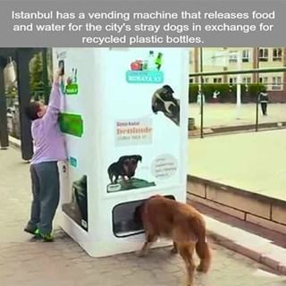 wholesome animal meme - Dog - Istanbul has a vending machine that releases food and water for the city's stray dogs in exchange for recycled plastic bottles.