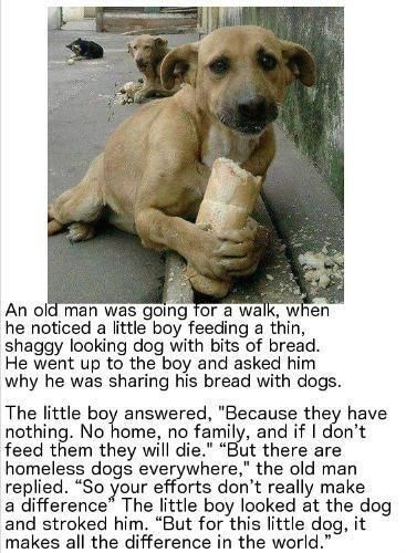 """wholesome animal meme - Dog - An old man was going for a walk, when he noticed a little boy feeding a thin, shaggy looking dog with bits of bread. He went up to the boy and asked him why he was sharing his bread with dogs.. S The little boy answered, """"Because they have nothing. No home, no family, and if I don't feed them they will die."""" """"But there are homeless dogs everywhere,"""" the old man replied. """"So your efforts don't really make a difference"""" The little boy looked at the dog and stroked him"""