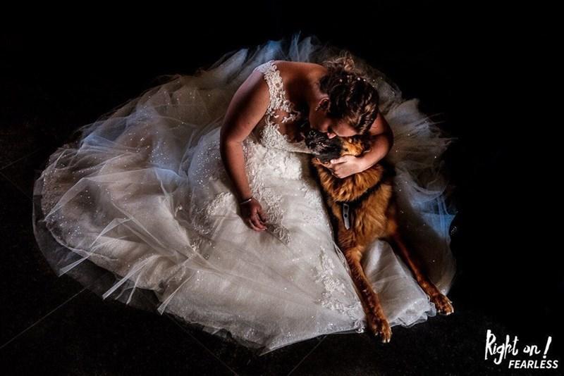 wedding dog - Veil - FEARLESS