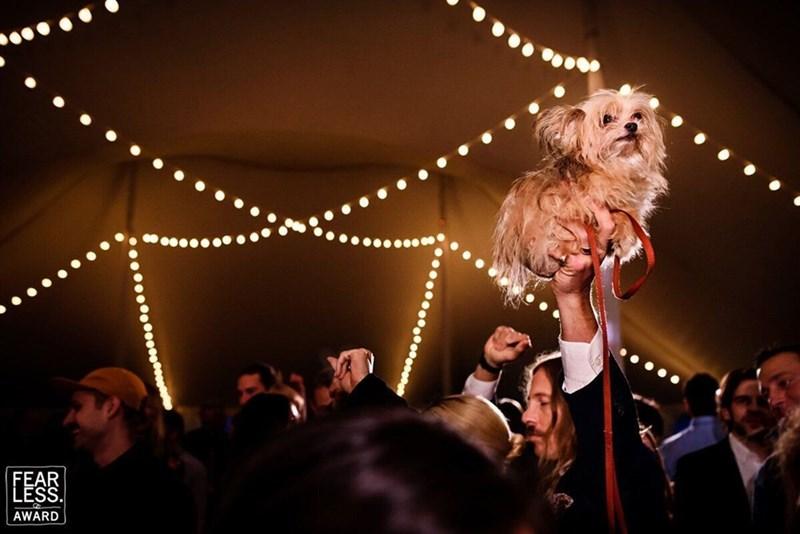 wedding dog - Event - AWARD RS
