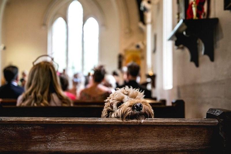 wedding dog - Ceremony