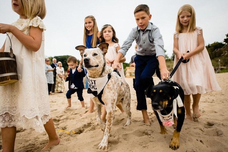 wedding dog - Dog - EST POG