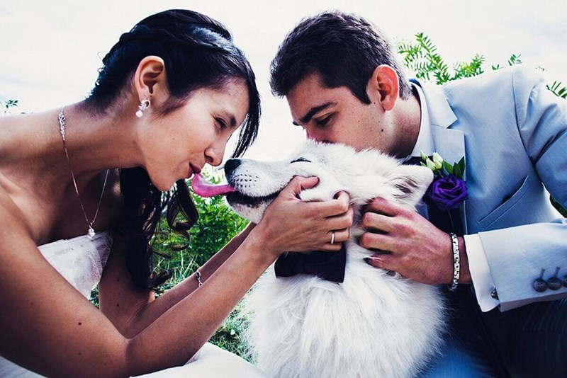 wedding dog - Photograph - C