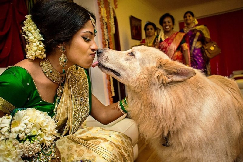 wedding dog - Dog