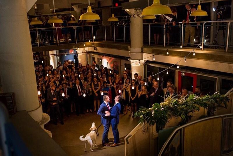 wedding dog - Crowd