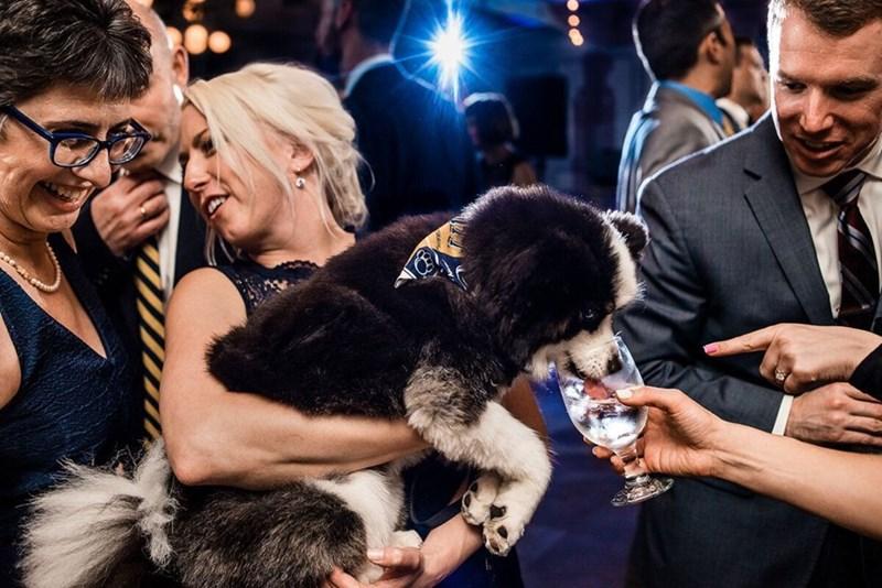 wedding dog - Fur