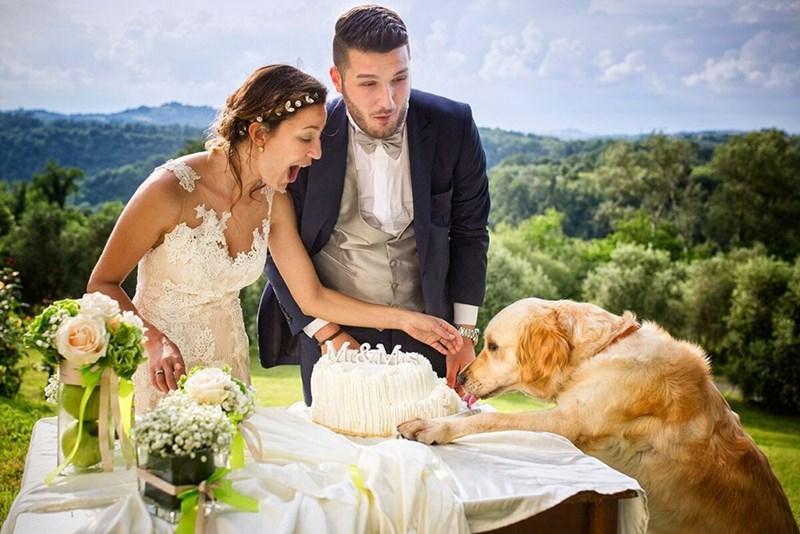 wedding dog - Wedding dress