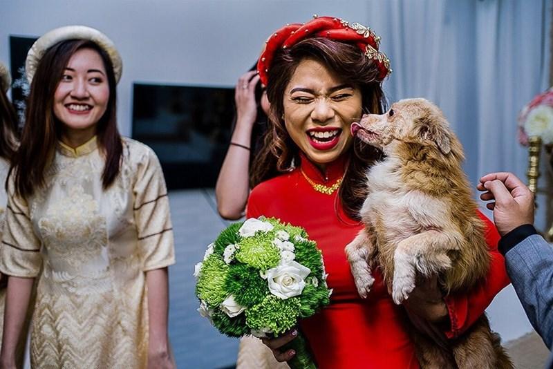 wedding dog - Facial expression